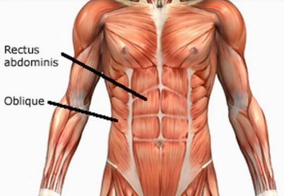 Abs Structure