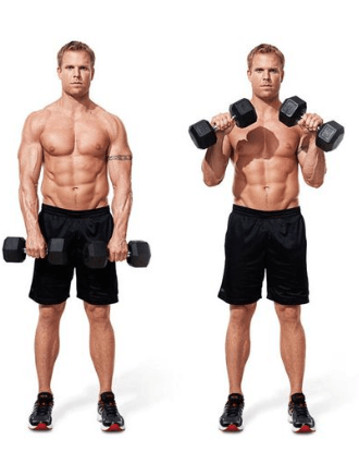 Dumbbell Reverse Curl Forearms Exercise 1