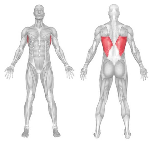 Lats Muscle Anatomy