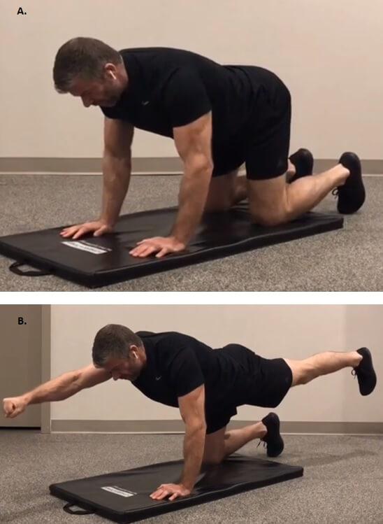 Spine Workout 1 - Bird Dog
